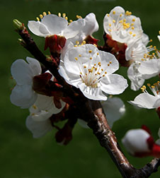 Spring time Wachau
