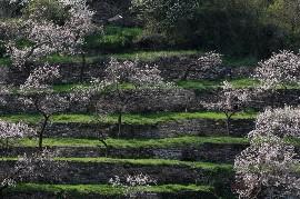 Großansicht Hotel Wachau Marillenblüte